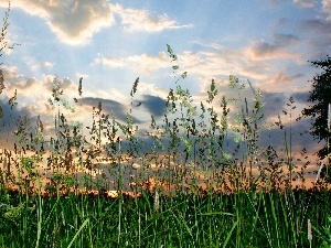 clouds, Meadow, grass