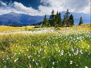 woods, Meadow, clouds, Spring, Mountains, Flowers