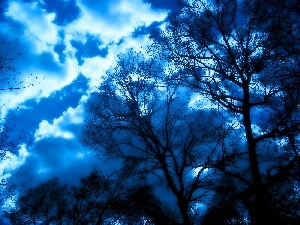 trees, forest, clouds, viewes