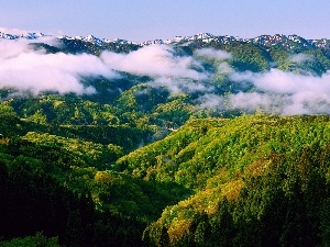 clouds, Mountains, woods