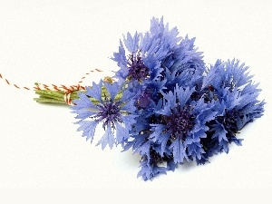cornflowers, bunch, Blue