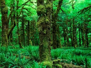 Beatyfull, forest, fern, Green