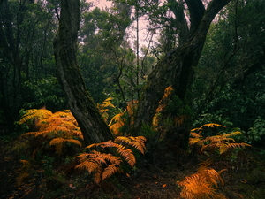 Yellowed, fern, viewes, forest, trees