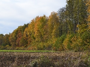 autumn, forest, Field, wall