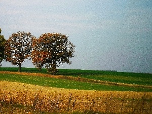 trees, autumn, Field, viewes