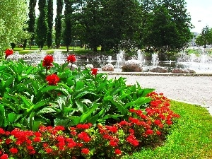 Flowers, fountain, flowerbed, Red, Park