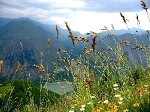 Mountains, Wildflowers, Flowers, grass