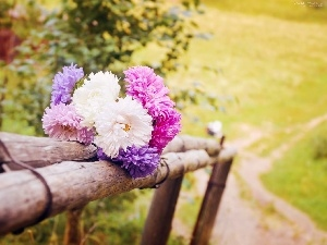 bouquet, Meadow, Astra, fence, summer, Flowers, Path