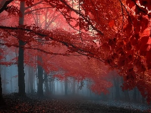 autumn, viewes, Fog, trees