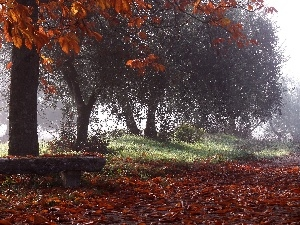 viewes, Park, Fog, autumn, Way, trees