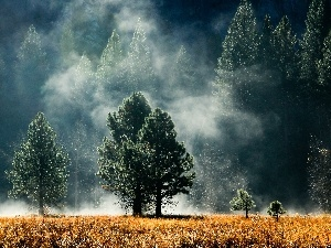 Fog, Meadow, forest
