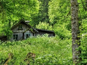 forest, wooden, house