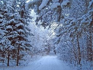 forest, winter, snow