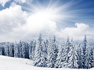 forest, winter, rays, sun, clouds
