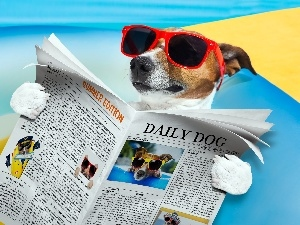 Jack Russell Terrier, Paper, Funny, Glasses