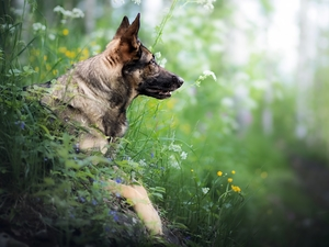 Plants, dog, German Shepherd