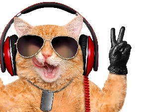 cat, Glasses, glove, HEADPHONES