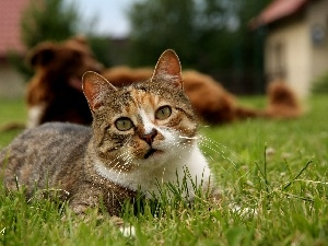 The look, kitten, grass