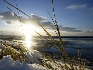 grass, snow, sun, sea, Early