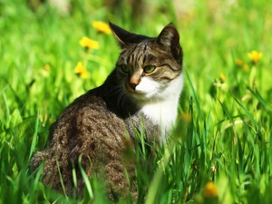 cat, sun, green, grass