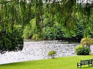 Park, Bench, green, lake