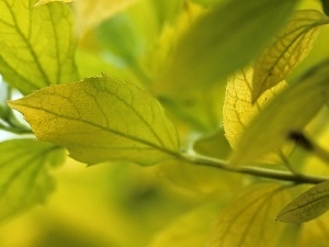 Yellow, Leaf, green ones