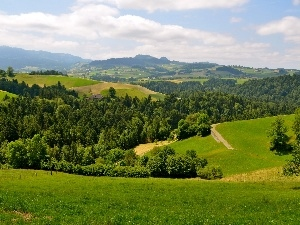 hills, Meadow, forest