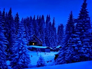 Home, forest, winter