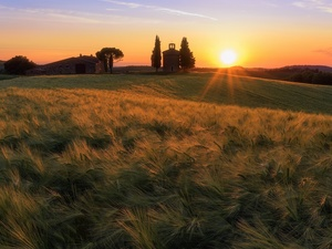 house, tower, Italy, belfry, Tuscany, corn, Field, Great Sunsets
