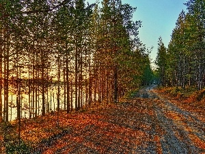 lake, autumn, trees, viewes, Way