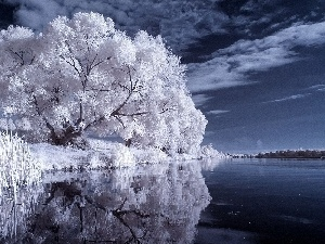 lake, Sky, trees, viewes, White