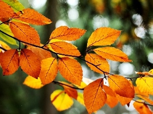 autumn, Orange, Leaf, branch