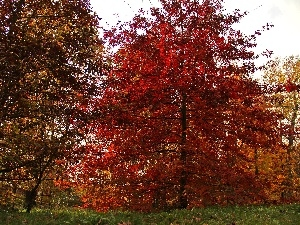 viewes, Garden, Leaf, autumn, Red, trees