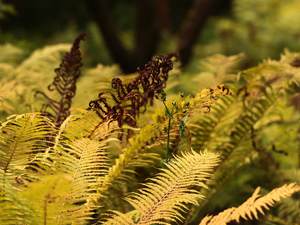 Leaf, fern, Plants