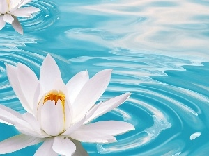 water-lily, beatyfull, Flowers