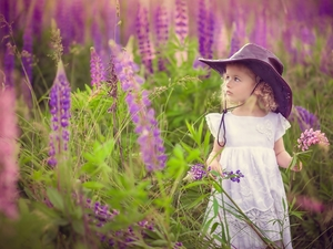 girl, lupine, Meadow, Hat