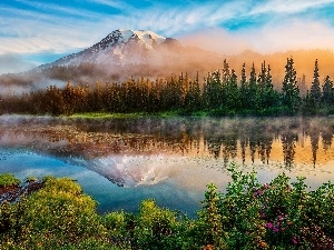 forest, lake, morning, reflection, Fog, Mountains