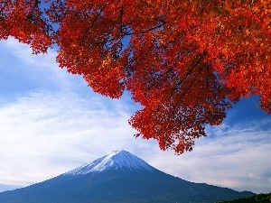 mountains, color, Leaf
