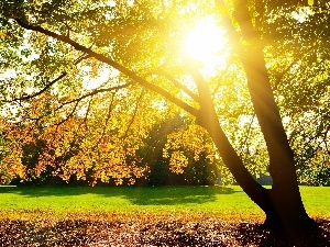 Park, viewes, rays of the Sun, trees