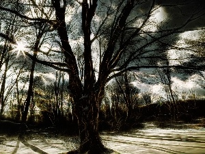 rays of the Sun, Art, trees, viewes, winter