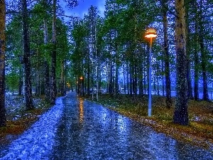 Pavement, Lamps, trees, viewes, Park