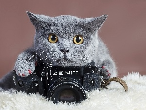cat, Camera, photographic, British