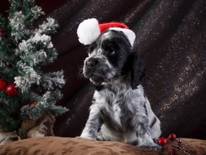 English Springer Spaniel, dog, Nicholas, christmas tree, Hat, Puppy