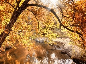 autumn, viewes, River, trees