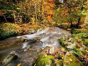 River, autumn, forest