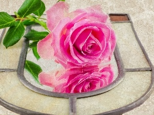 rose, Beauty, Pink