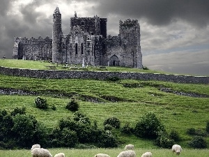Sheep, Castle, Hill