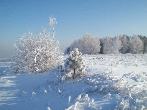 trees, Bush, snow, viewes