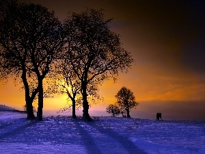 trees, west, snow, winter, viewes, sun