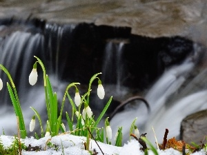 snowdrops, waterfall, snow